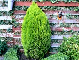 Bomen Op Erfgrens.Home Buurt Vereniging Bloemendaal Noord